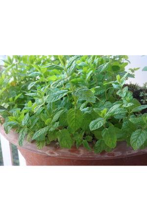 green plant accessories