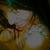 abrar