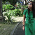 joanna_morden