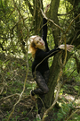 Kate-moss-for-topshop-leggings-topshop-tights