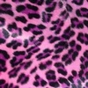 11151288386notaclue_pink_leopard